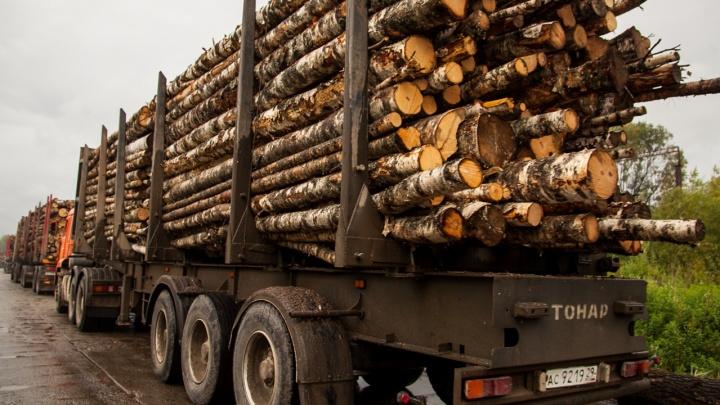 «Это проблема организации использования лесов»: власти Кузбасса объяснили рост цен на древесину