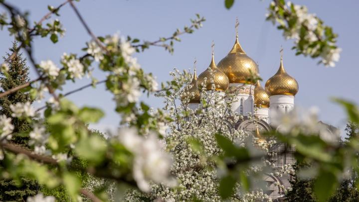 Ароматный тест: проверьте, знаете ли вы, какие деревья цветут в Ярославле