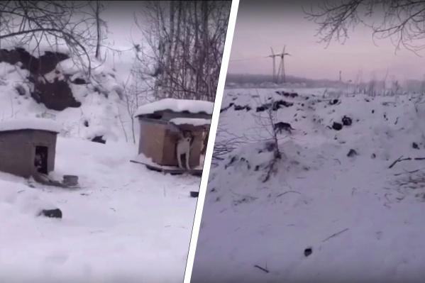 Первых умерших собак нашли 14 января