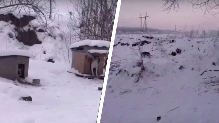 Под Новосибирском заявили о массовом отравлении собак— пострадали как бездомные животные, так и породистые