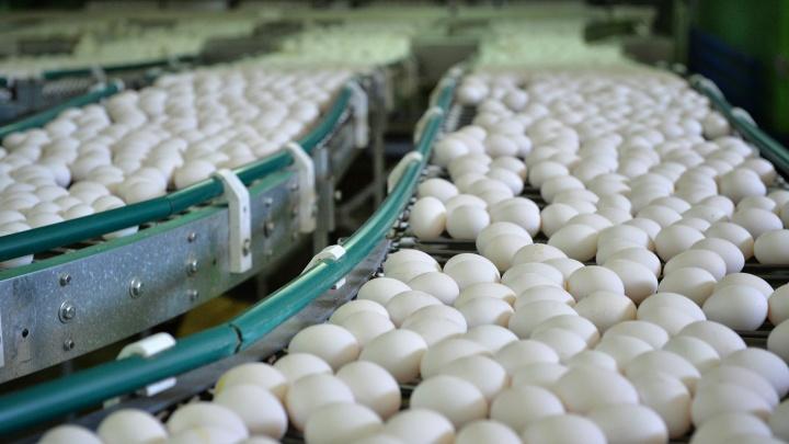 На Иртышской птицефабрике начали бесплатно выдавать продукцию работникам и пенсионерам предприятия