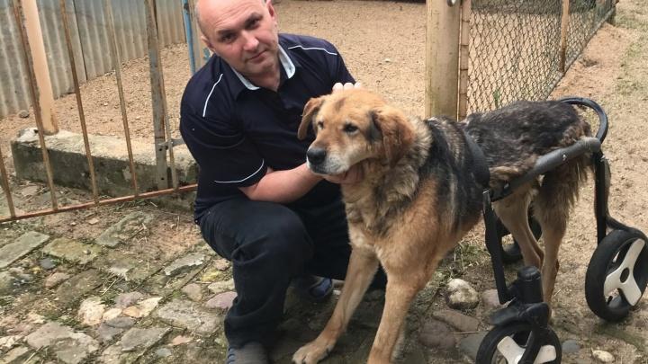 «Предлагали только усыпить»: хозяин смастерил для своего старого пса инвалидную коляску