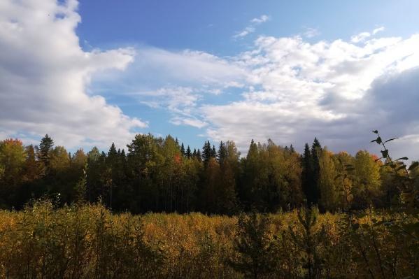 Если вы не любите искать грибы, то не отказывайте себе в удовольствии погулять по осеннему лесу