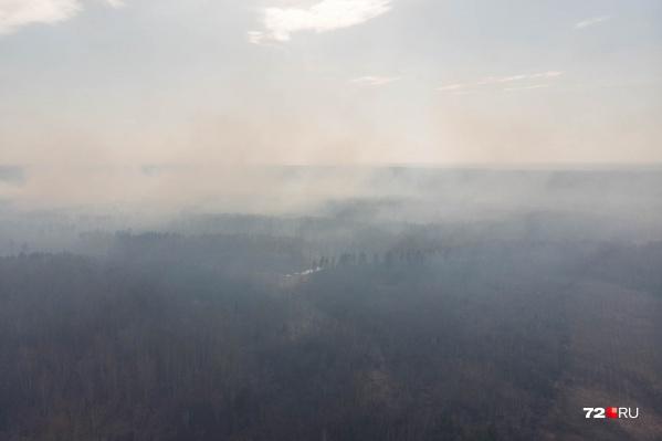 В окрестностях Тюмени горят торфяники