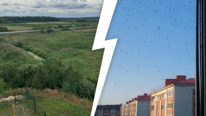«Они лезут сквозь сетки». В квартирах жителей нового ЖК в Боровском нашествие насекомых