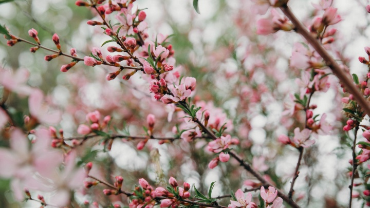 Яблони цветут и пахнут! Любуемся весенней Тюменью в 15 нежных кадрах