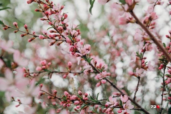 Вы только посмотрите на этот нежный кадр: в город пришла весна