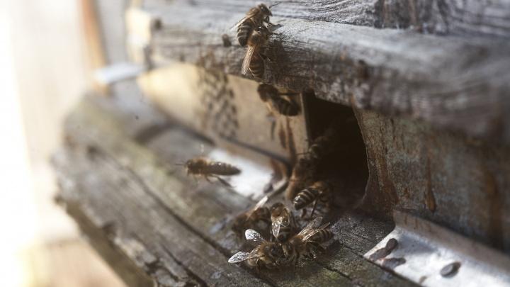 Роспотребнадзор наконец-то назвал причину странной массовой гибели пчел в Кузбассе