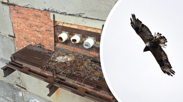«У объекта хозяева есть»: в Норильске приостановили снос ветхого здания завода из-за гнезда птиц