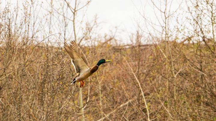 «Птицы сейчас строят гнезда»: пермские экоактивисты объявляют месяц тишины на малых реках