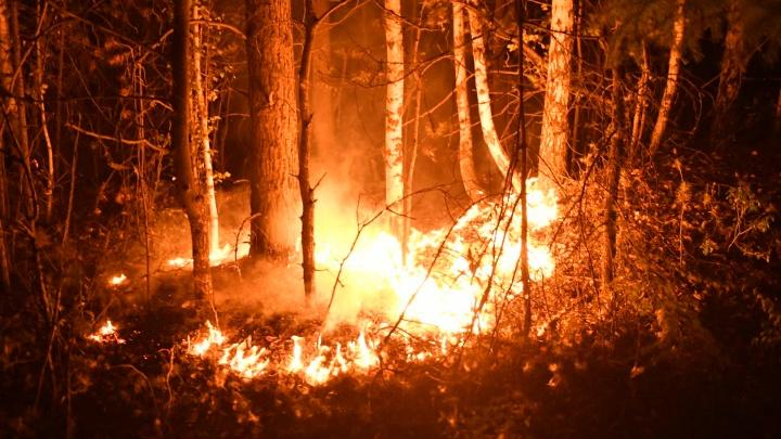 Почти тысяча человек тушит лесные пожары в Свердловской области. Публикуем все оперативные данные