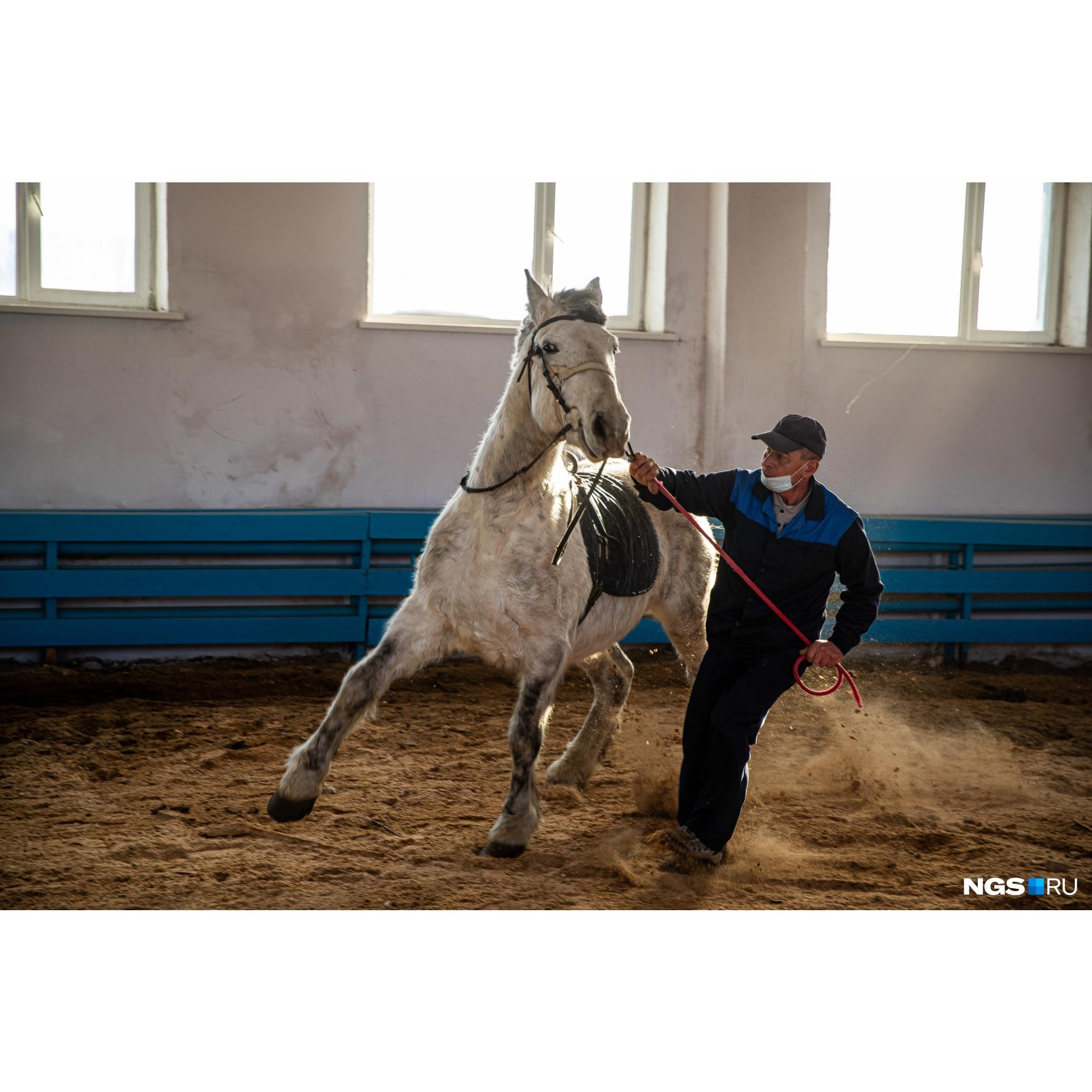 В доме-интернате есть девять лошадей для занятий иппотерапией