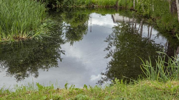 В Ярославской области тело 4-летнего мальчика нашли в пруду