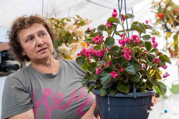 Меньше всего проблем с бегонией вечноцветущей — с нее Наталья советует начинать неопытным садоводам