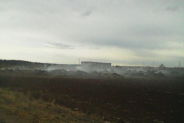 Пожар из-за съемок видео для TikTok произошел на ферме в Нытвенском районе
