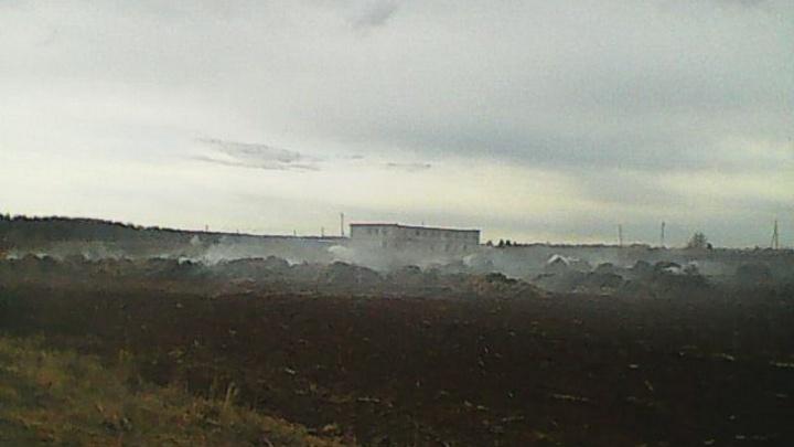 Школьницы из Прикамья устроили пожар на ферме, снимая видео для TikTok