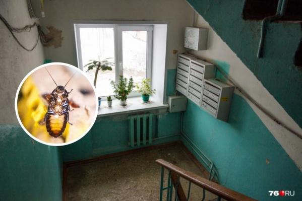 Одни специалисты пугают нашествием тараканов, другие успокаивают, говоря, что ничего такого не будет