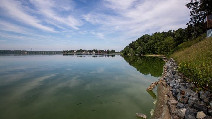 Что случилось с позеленевшей рекой под Новосибирском? Публикуем результаты экспертизы (дело не только в водорослях)