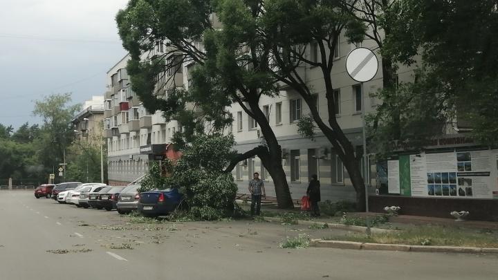 МЧС объявило в Челябинской области штормовое предупреждение из-за сильного ветра