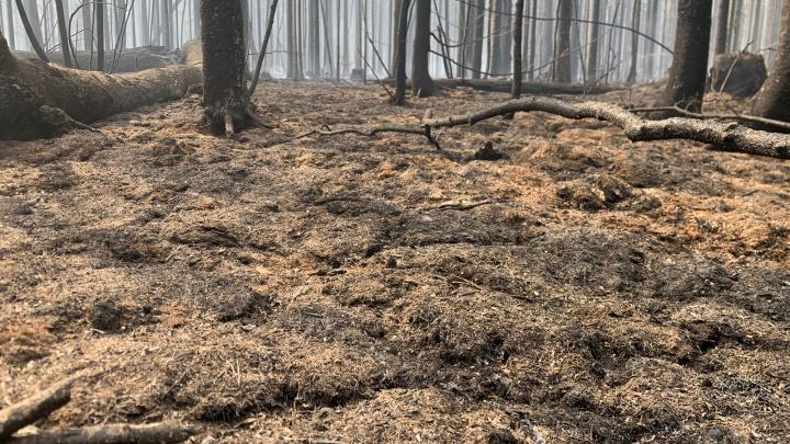 «Прежний лес увидят лишь наши внуки»: эксперт — о том, когда восстановятся сгоревшие окрестности Волчихи