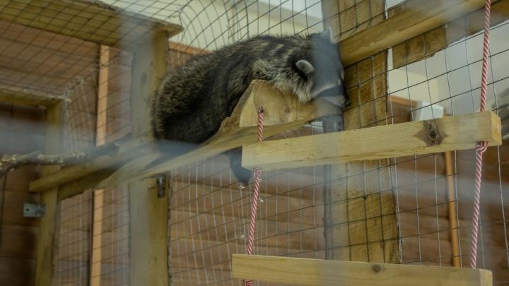 В Уфе в зоопарке, где енот напал на годовалого ребенка, нашли многочисленные нарушения