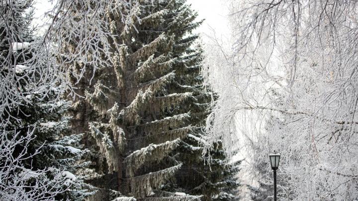 Вернутся морозы или растает весь снег? Прогноз погоды на февраль в Новосибирске