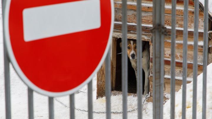 Животных уничтожить, туши сжечь на месте: вВолгоградской области разгорелись четыре вспышки бешенства