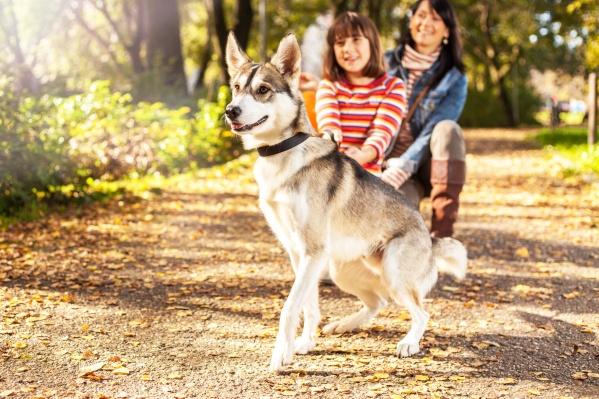 Весной особенно тщательно нужно осматривать собаку после прогулки