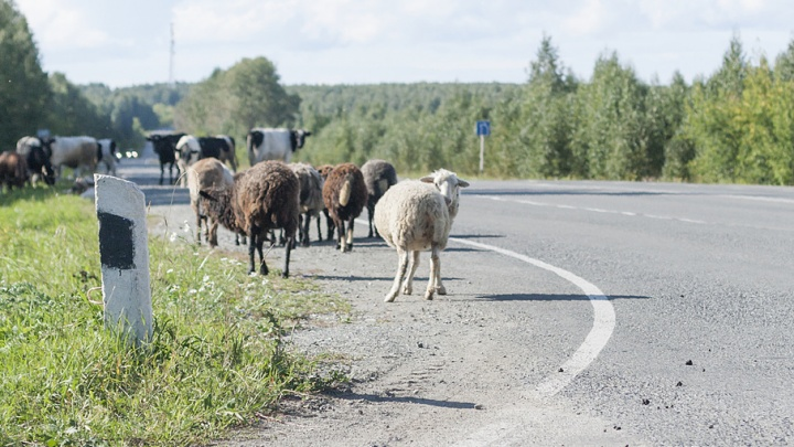 «Об экспорте не может быть и речи»: зауральские фермеры рассказали о последствиях засухи
