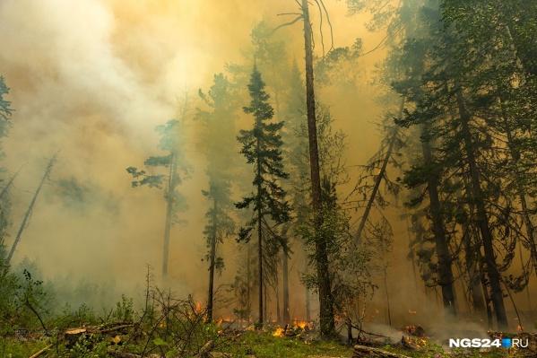 Со слов матери, парень выступал против поджигателей лесов