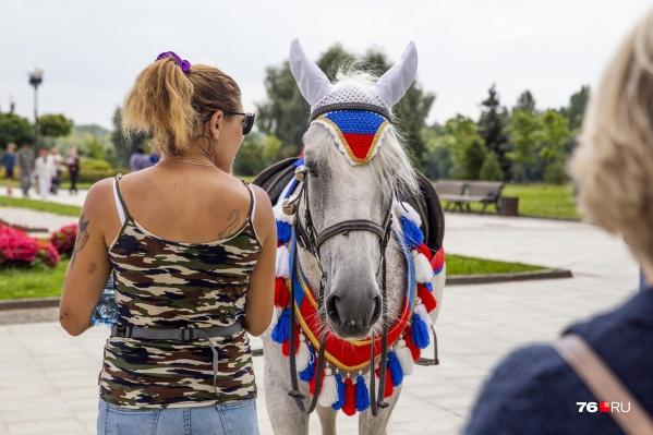 На лошадях можно кататься только в установленных местах