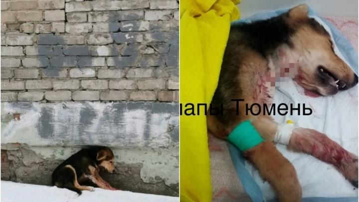 На Харьковской живодеры перерезали горло собаке и выбросили умирать на улицу