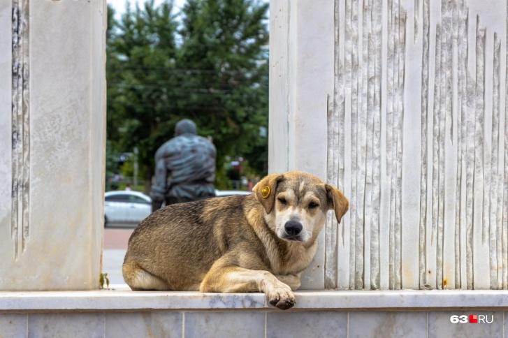 Желтая бирочка на ушке означает, что собаку отловили, стерилизовали и она не проявляет агрессии