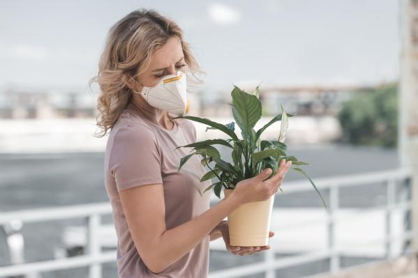 Можно ли сделать воздух в доме чище?