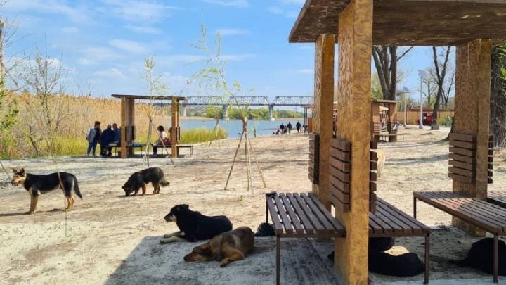 Парк и пляж на Зеленом острове открылись после благоустройства