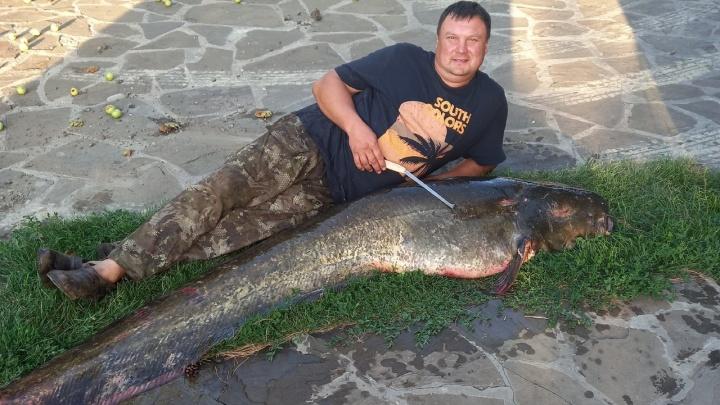 «Вытаскивал на берег 2 часа»: в Самарской области рыбак выловил 80-килограммового сома