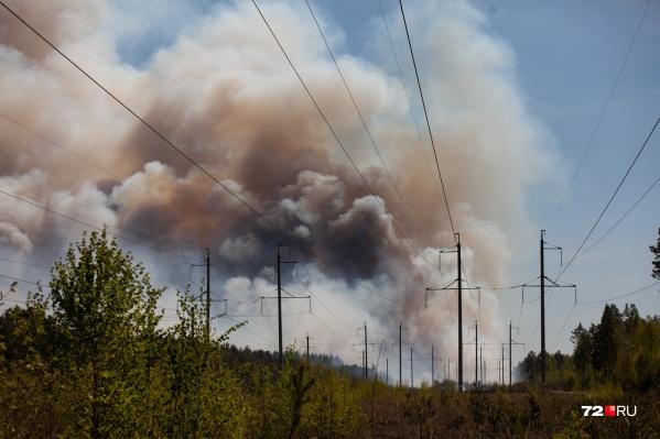 Пожары случаются в разных местах области. Жителям региона запрещено посещать леса