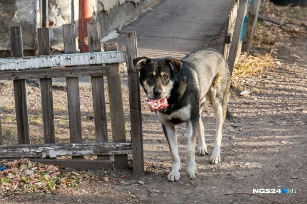 Специалисты собирались пролечить и чипировать собак, но на них напали с ножом