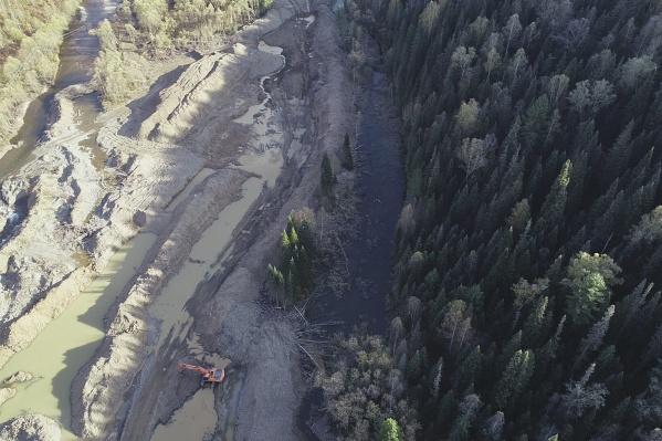 У компании не было разрешения на вырубку деревьев
