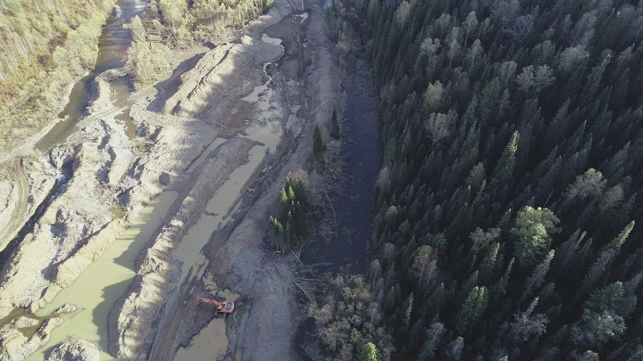 В Кузбассе золотодобытчики вырубили огромную площадь леса. Они использовали экскаваторы