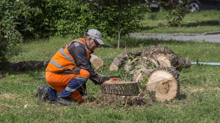 «Увидел, что пилят? Звони 112»: общественники потребовали остановить уничтожение деревьев в Волгограде