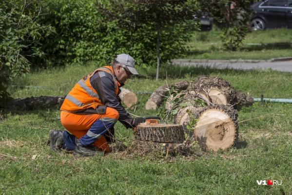 Вырубка деревьев — одна из острых проблем в Волгограде
