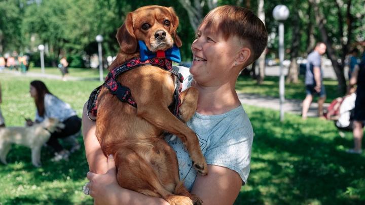 Власти Новокузнецка запретили выгул собак на детских площадках и в парках. Рассказываем, где можно