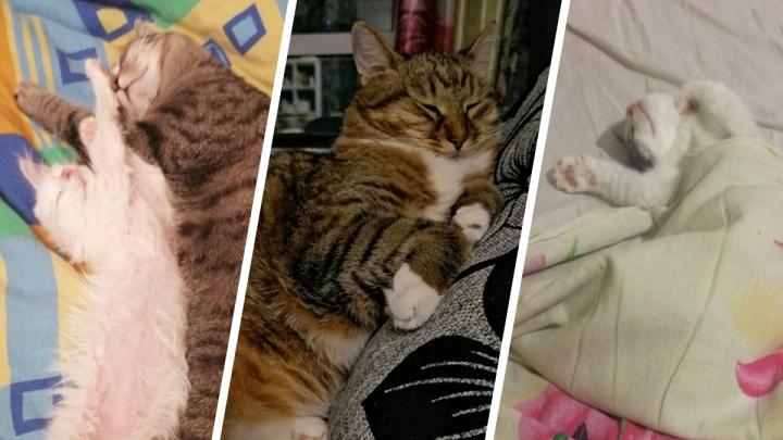 Такие сладкие! 20 котов, доказавших, что уснуть можно где угодно и в какой угодно позе