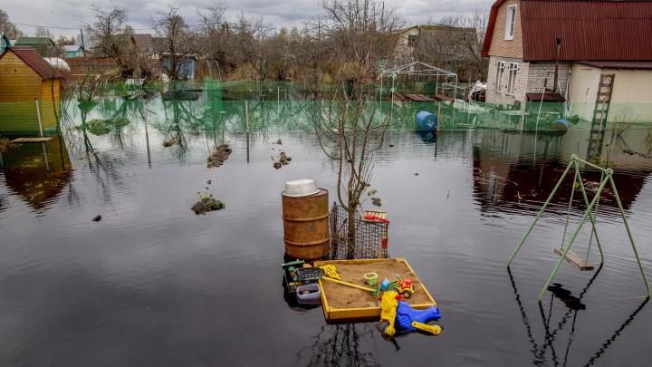 Затопленных дачных участков в Ярославской области стало в два раза больше. Кадры с мест