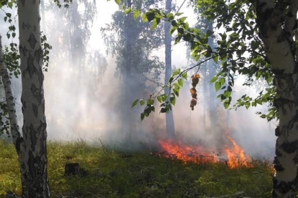 Ущерб от лесных пожаров в Зауралье будут возмещать виновники