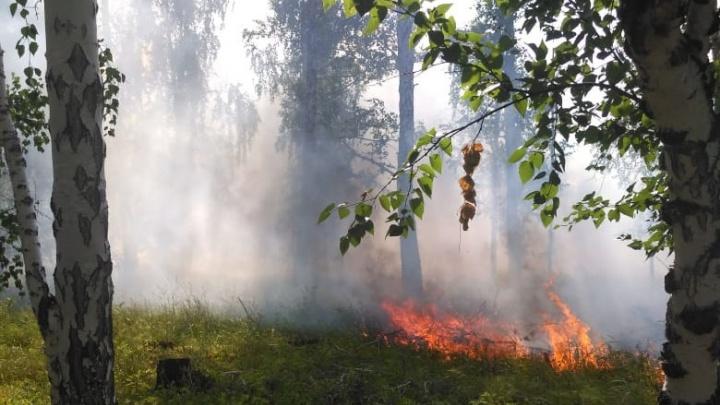В Курганской области после пожаров в лесах расследуют три уголовных дела