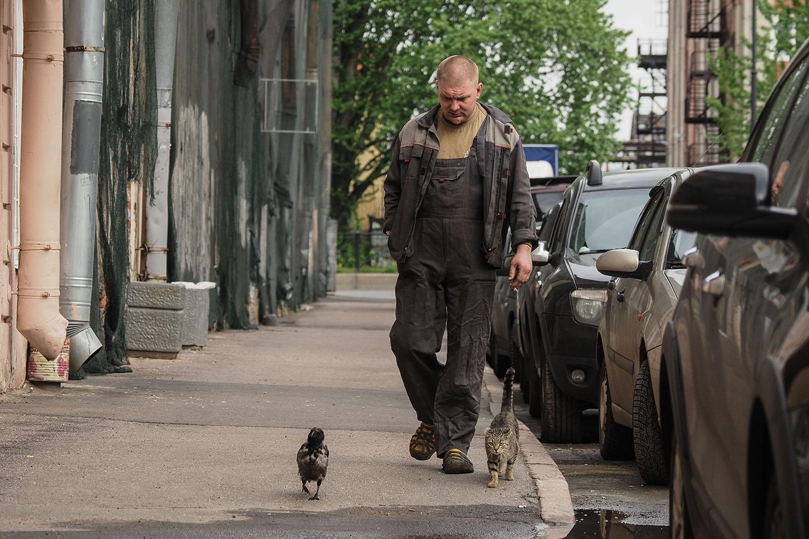 Кошка, ворона и человек шли на работу. Трое из Коломны  крупным планом