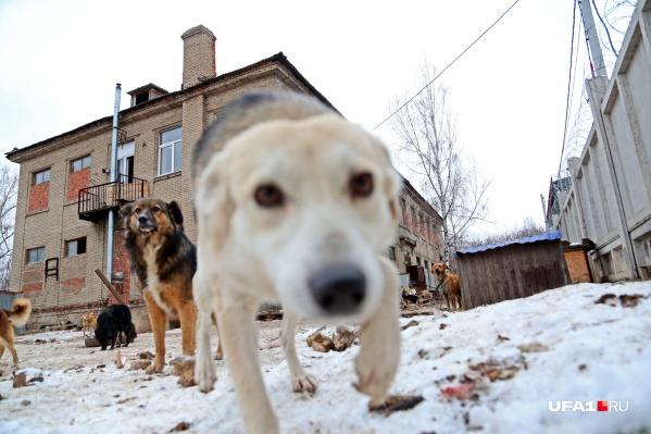 На территории заповедника собаки смогут свободно гулять