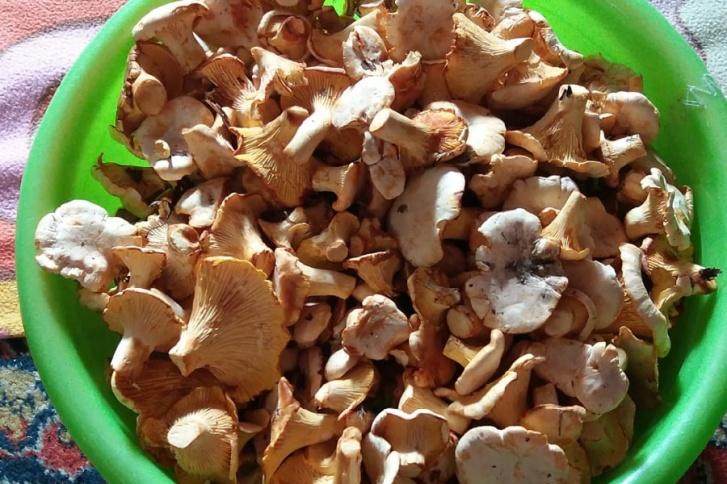 Пока встречаются в основном маленькие грибы